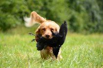 Hunde Jagdtrieb abtrainieren