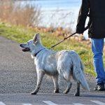 Hund an der Leine laufen lassen.
