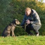 Hundetraining online