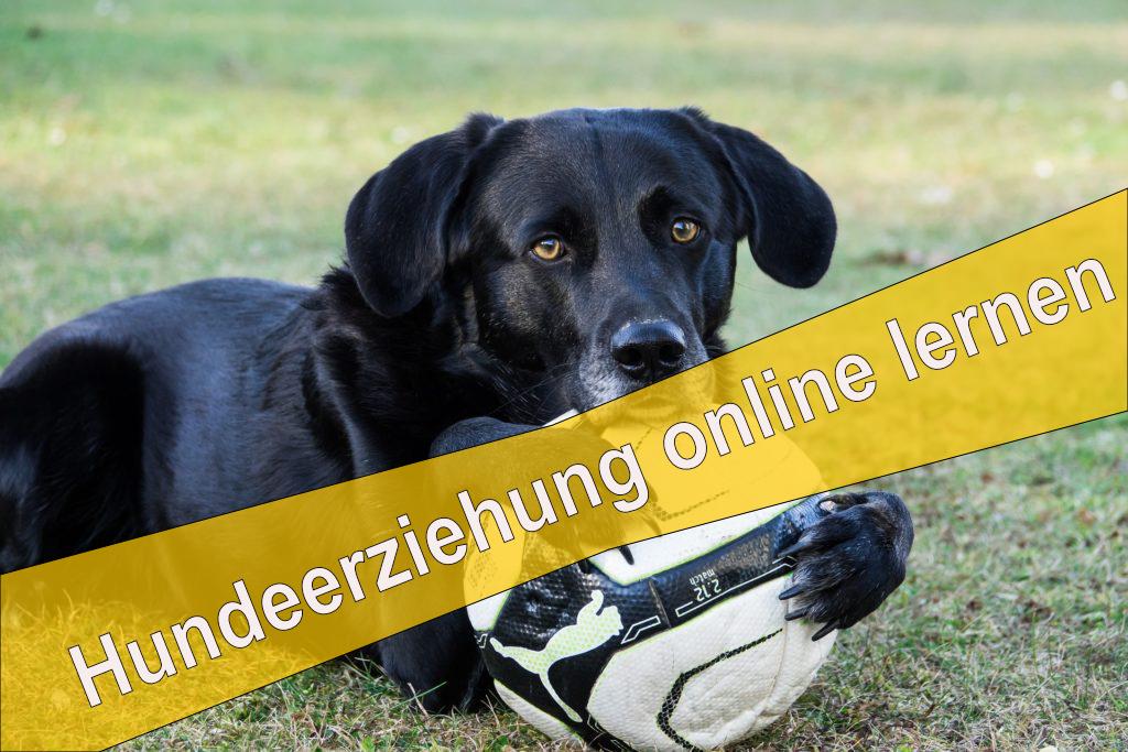 Onlinekurs Hundeerziehung online lernen